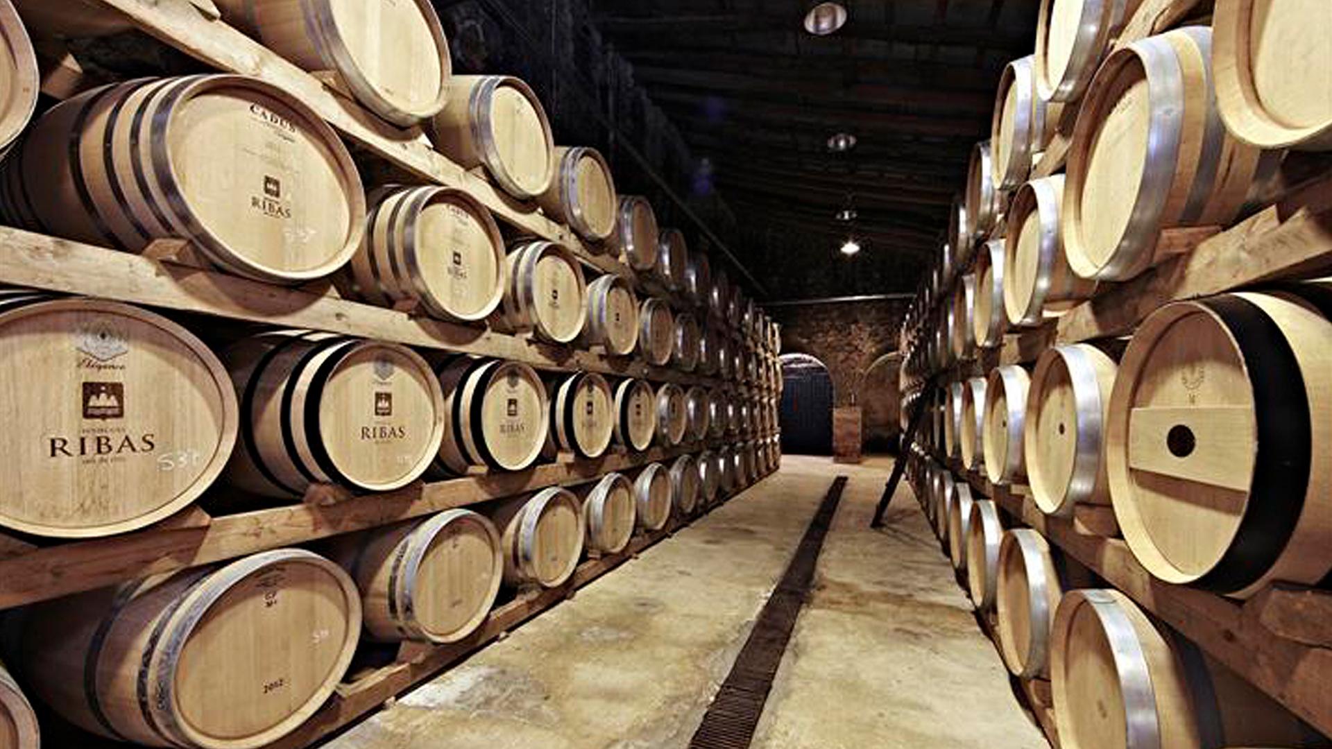 Bodegas Ribas Vineyard mallorca