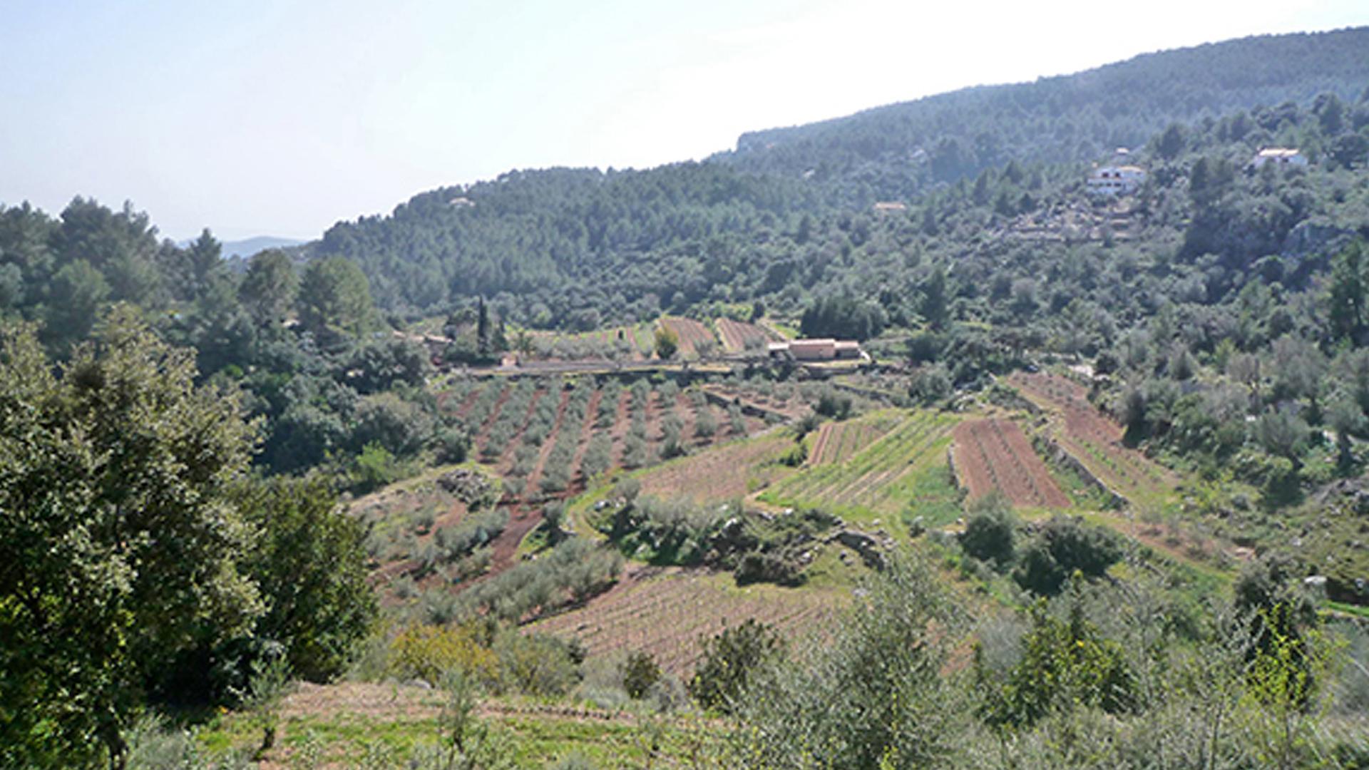 Es Verger winery mallorca