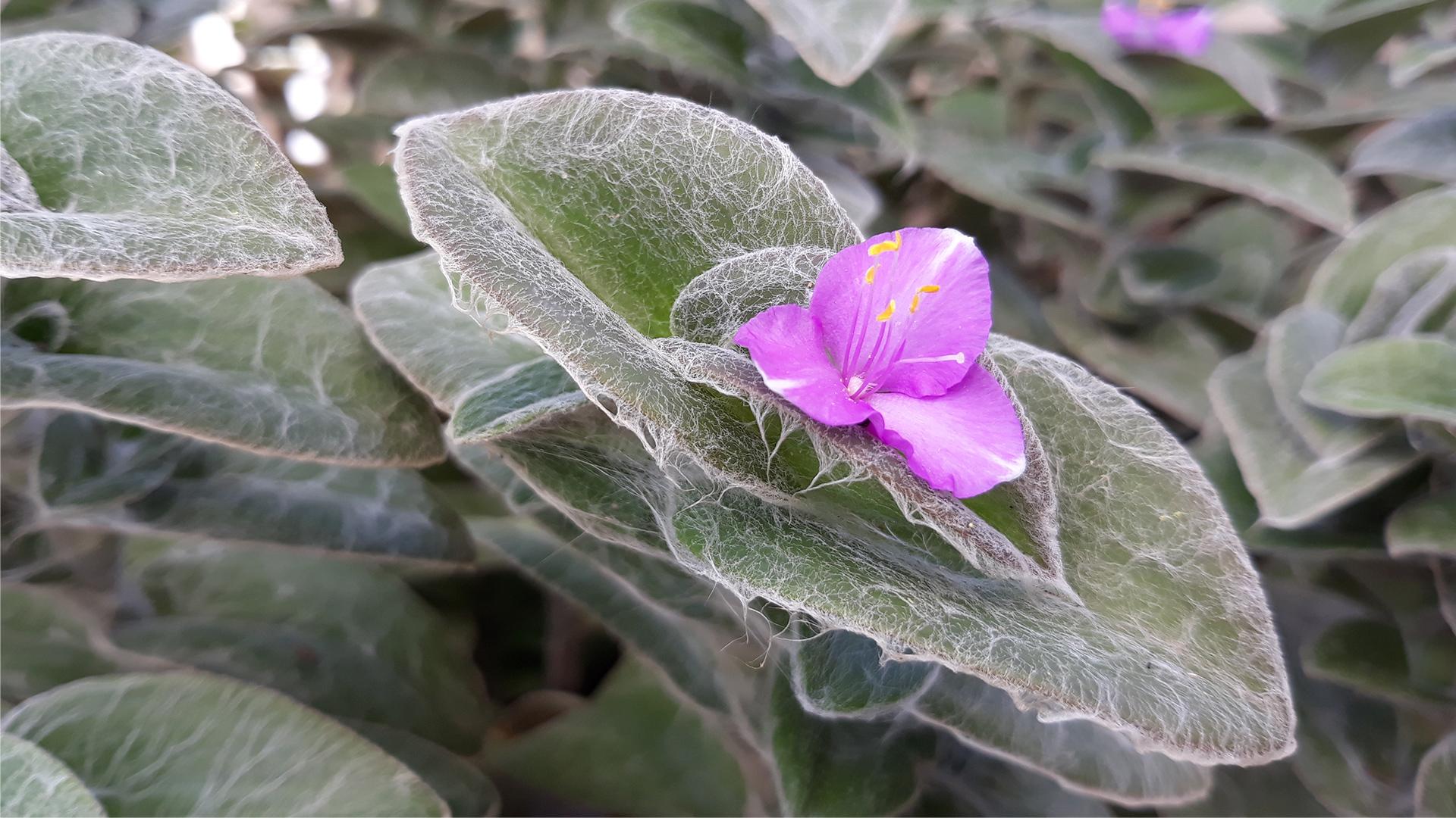 Fairy tale flower