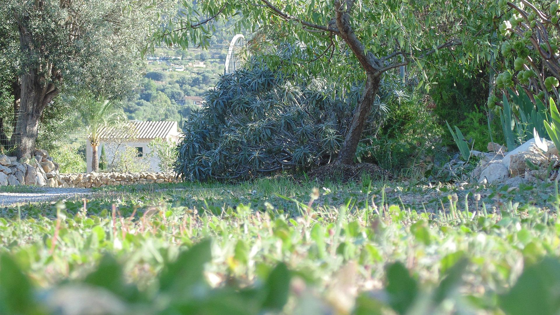 First Greens of Autumn G Arden Andratx