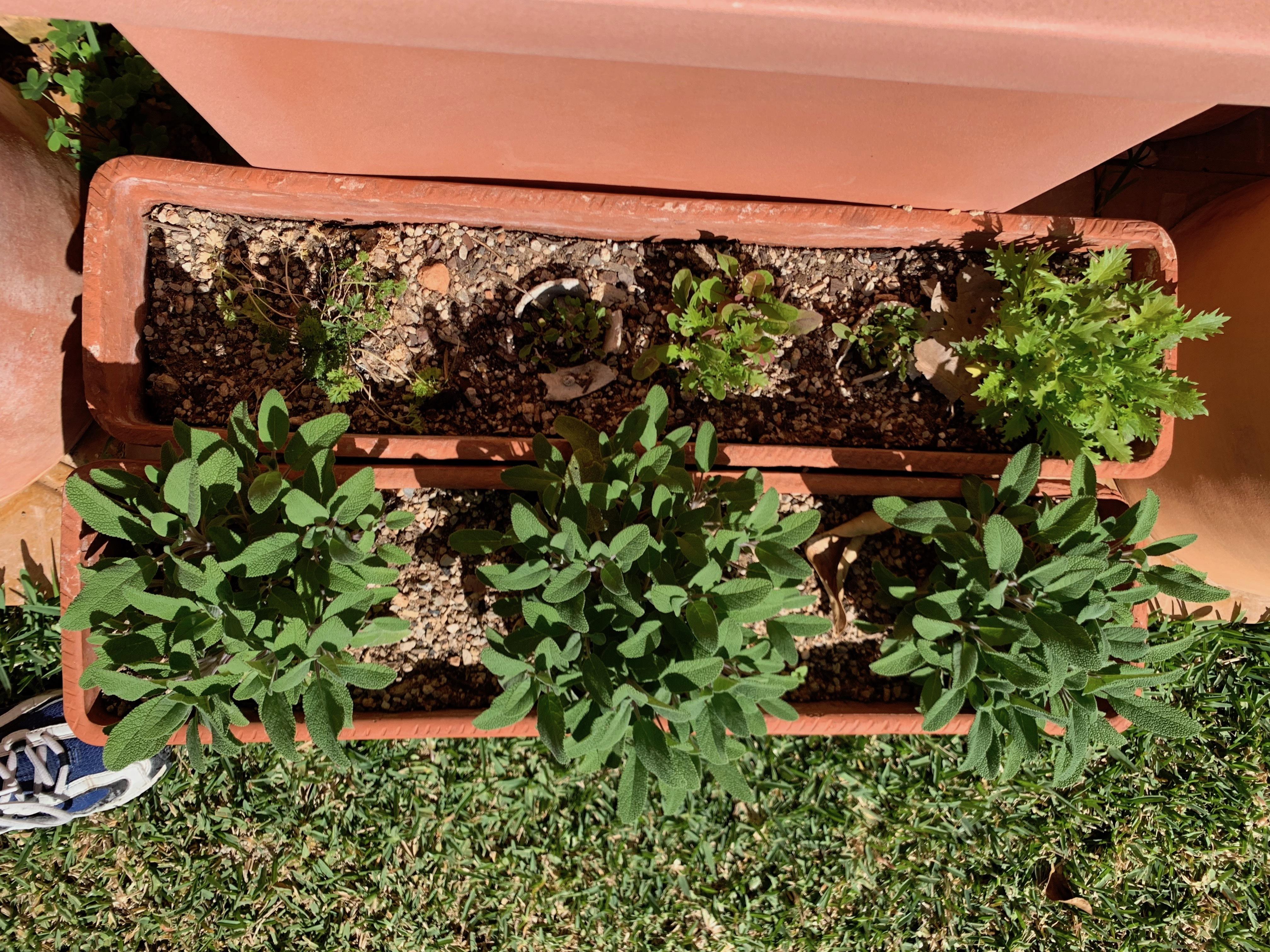 Grow it yourself 3 IMG 1072