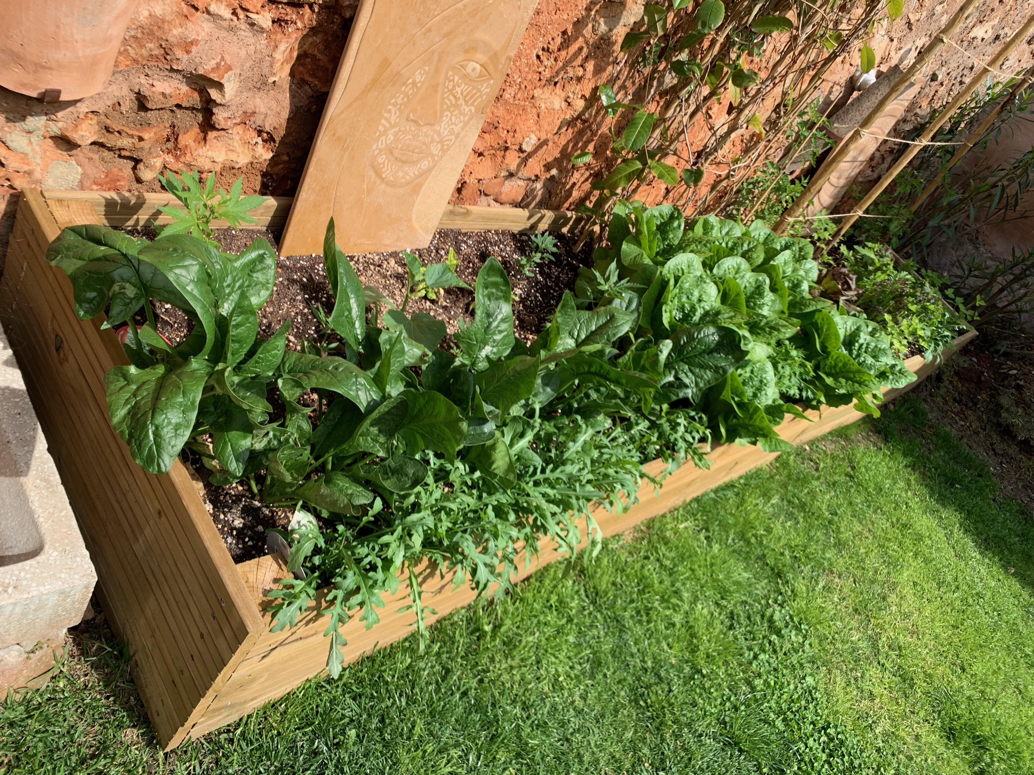 Grow it yourself 3 IMG 1134