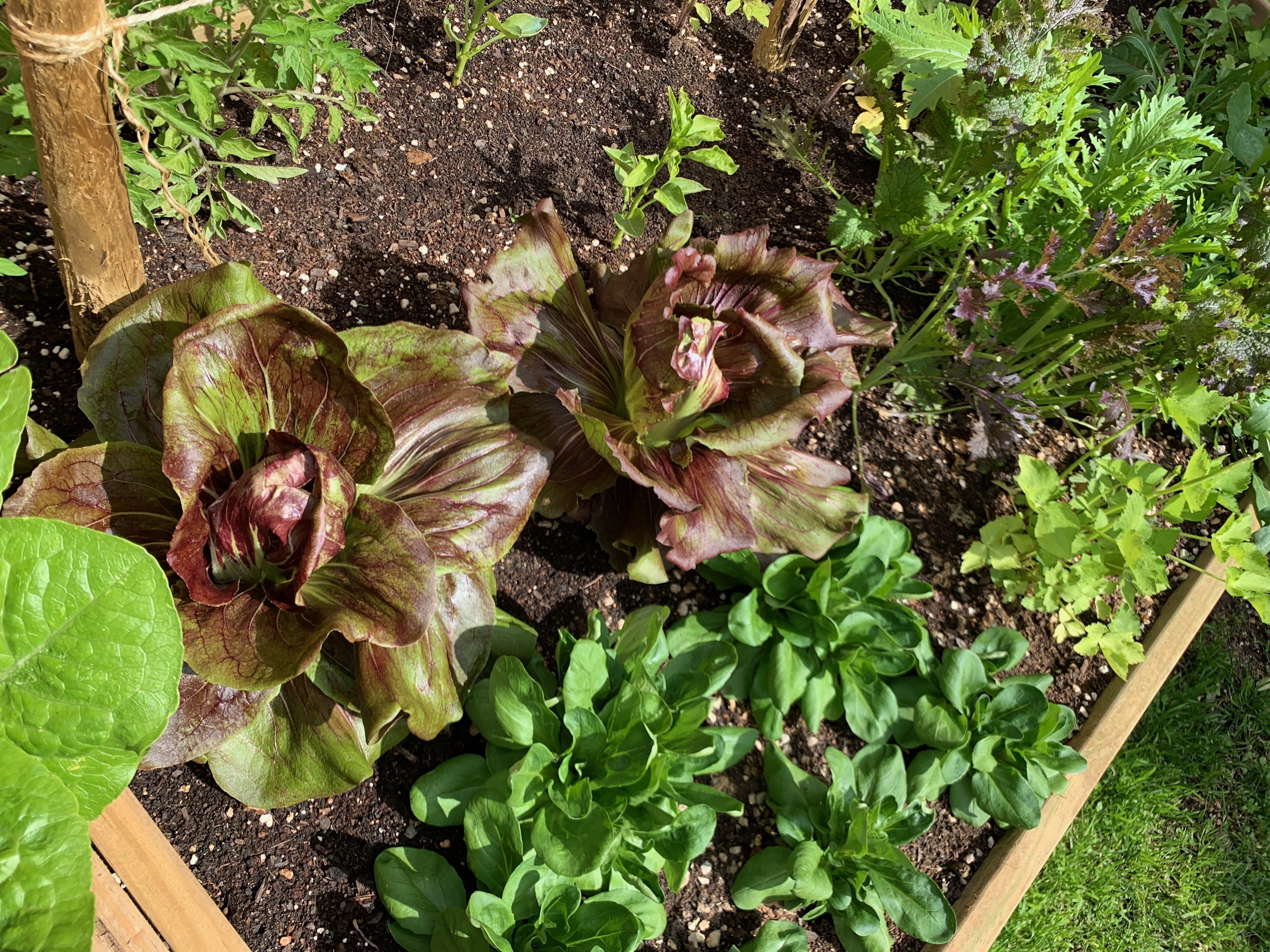 Grow it yourself 3 IMG 1137