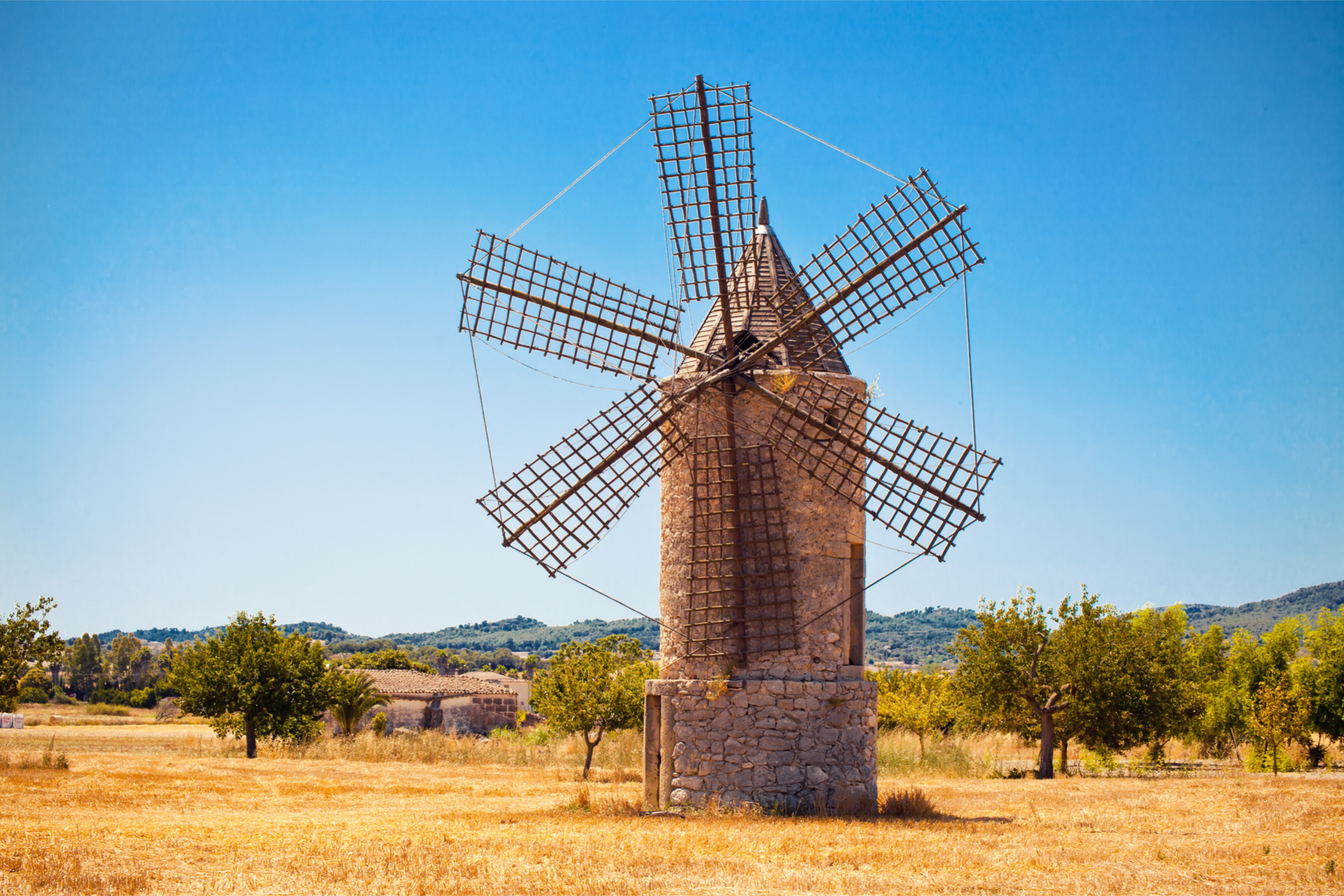 Windmill In Field Sunshine