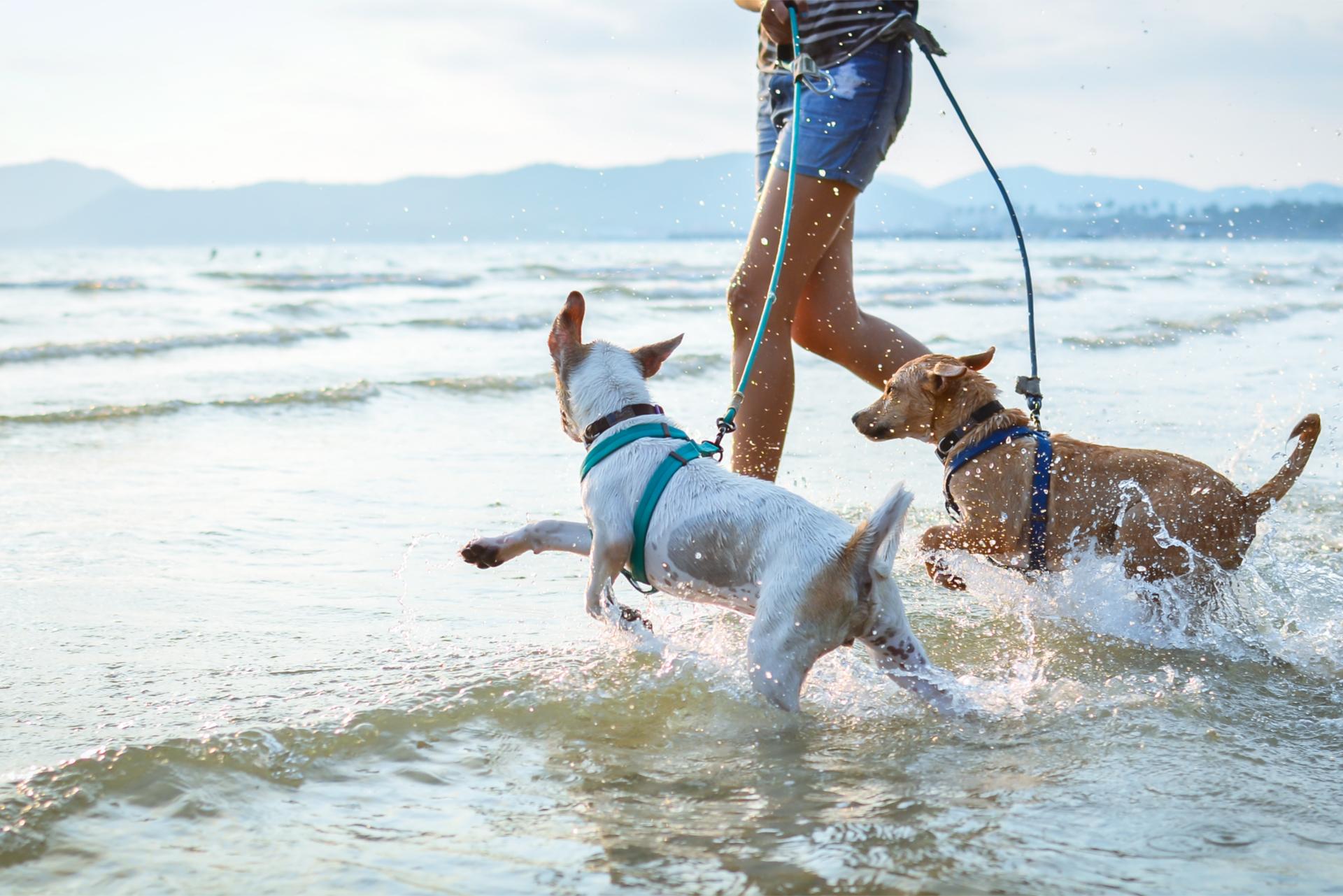 Dogs Enjoy Playing On Beach