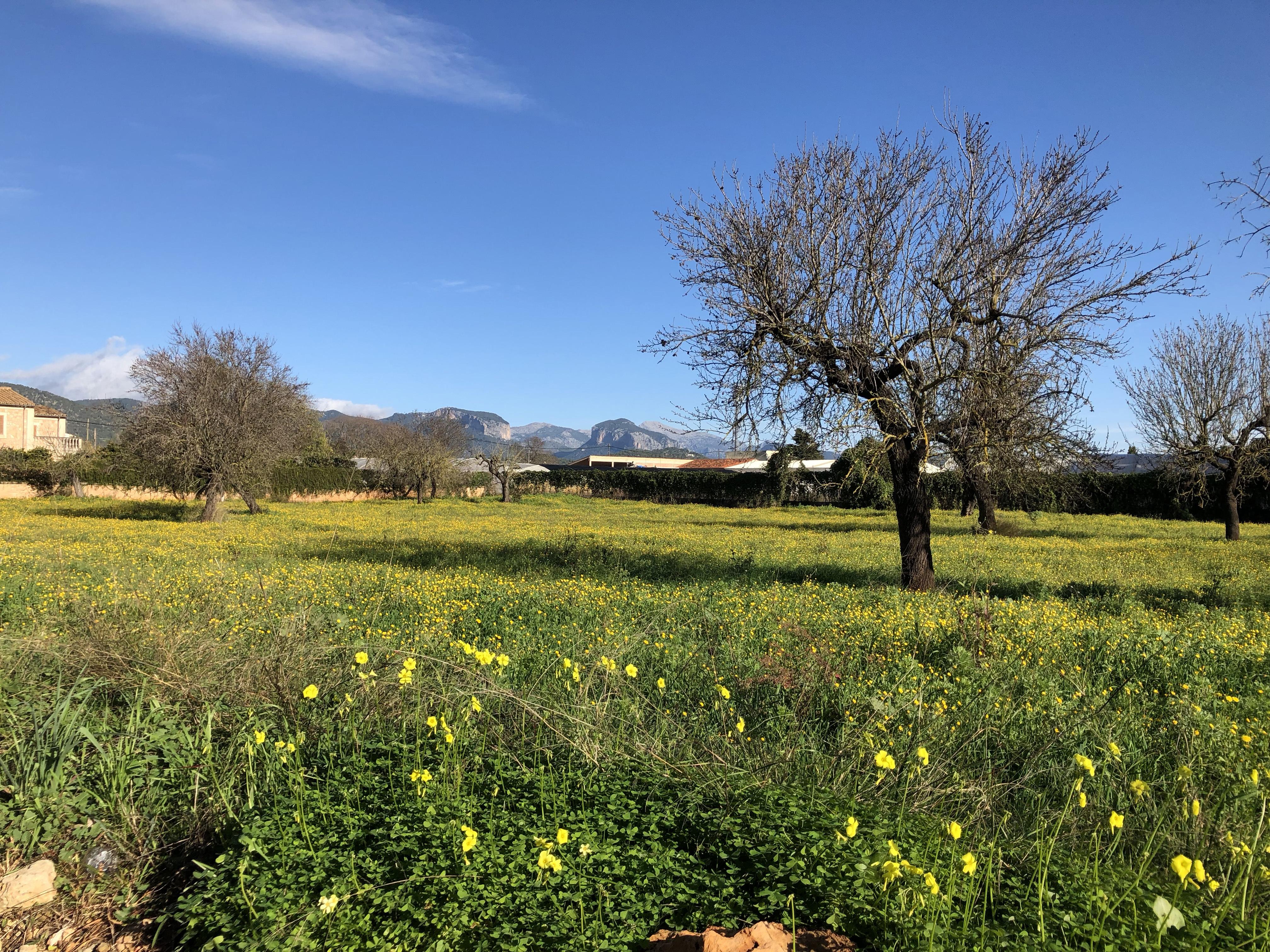 Hike Santa Maria To Orient Mallorca Img 3441