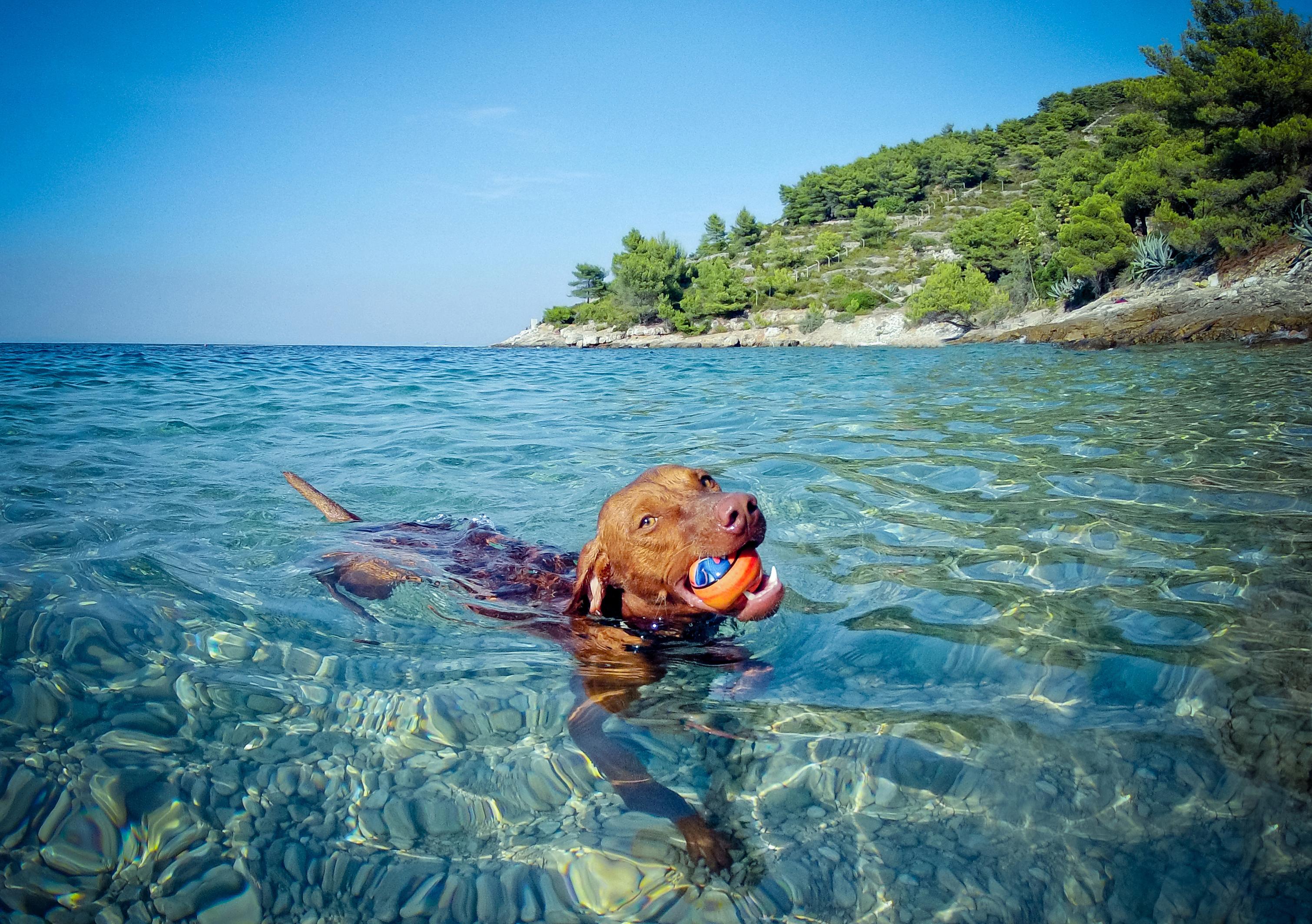 dog in water heatwave