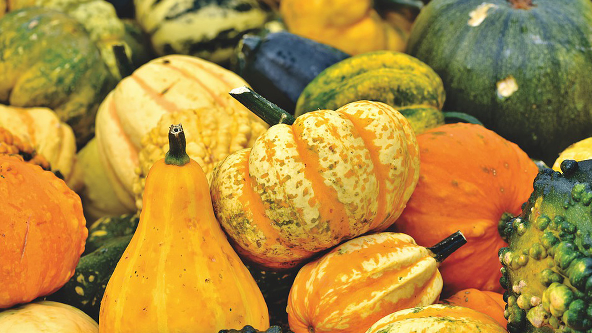 Squash autumn mallorca
