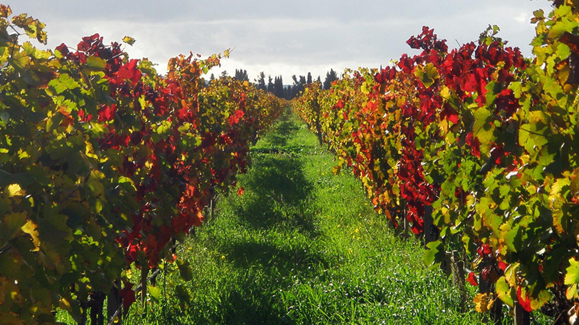 Vineyard Biniagual